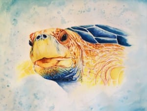 Jess King Turtle love watercolour framed