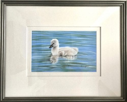 , Soft as a Feather, Manly Harbour Gallery