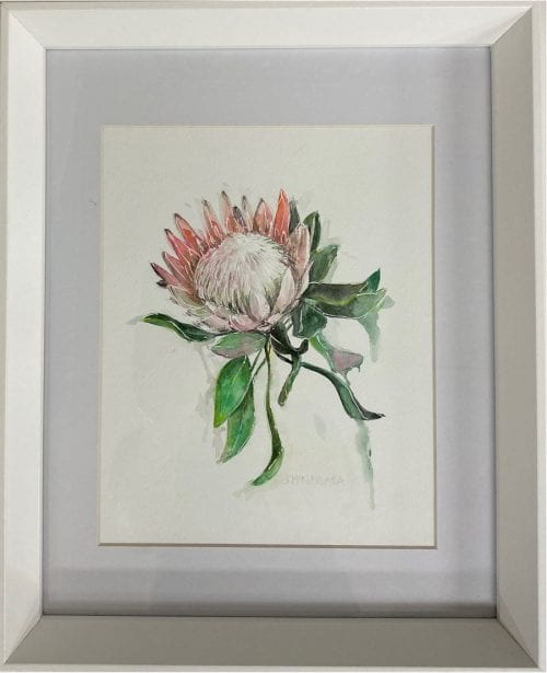 pink protea watercolour by Jenny McNamara Furlong