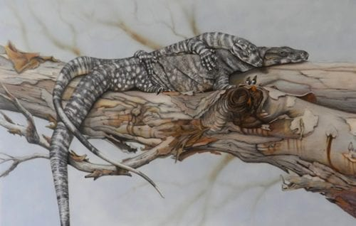 , The Sunbathers – Lace Monitors, Manly Harbour Gallery