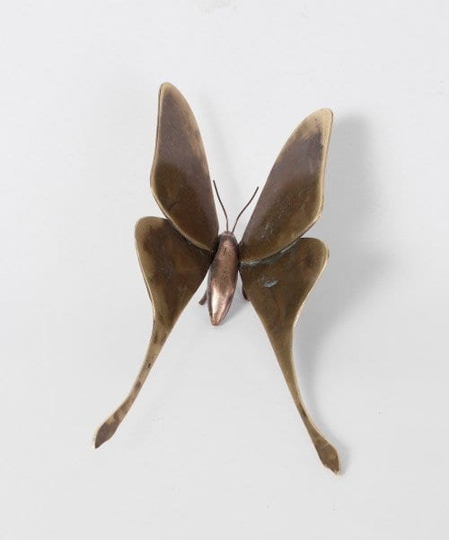 Luna Moth by Denise Murray Australian Artist. Bronze Sculpture